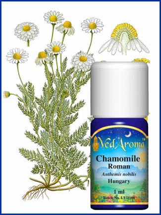 Chamomile Roman Essential Oil (1 ml)