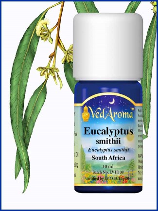 Eucalyptus Smithii Essential Oil (10 ml)