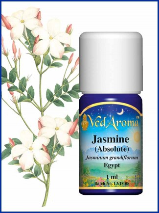 Jasmine Absolute (1 ml)