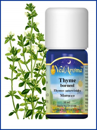 Thyme Borneol Essential Oil (10 ml)