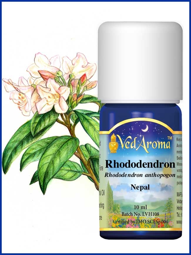 Rhododendron Essential Oil (10 ml)