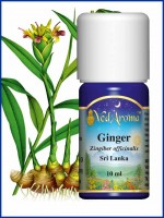 Ginger Essential Oil (10 ml)