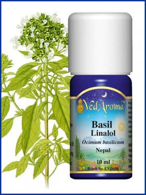 Basil Linalool Essential Oil (10 ml)