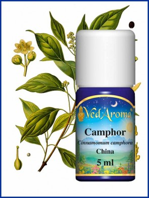 Camphor Essential Oil (5 ml)