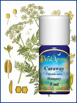 Caraway Essential Oil (5 ml)