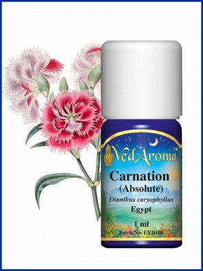 Carnation Absolute  (1 ml)