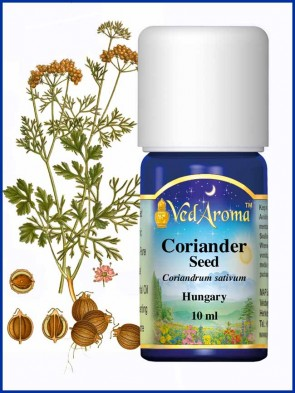Coriander Seed, Hungary Essential Oil (10 ml)