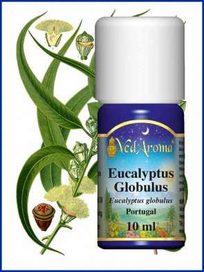 Eucalyptus Globulus Essential Oil (10 ml)