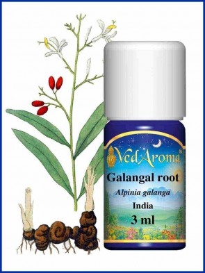 Galangal Root Essential Oil (3 ml)