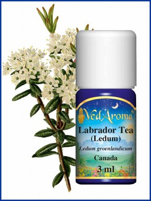 Labrador Tea (Ledum) Essential Oil (3 ml)