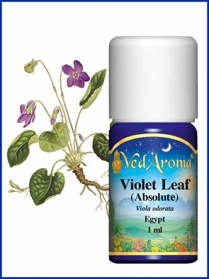 Violet Leaf, Absolute (1 ml)